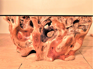 Tree Root Coffee Tables: Glass Top: Roots Furniture Cabinets & Tile
