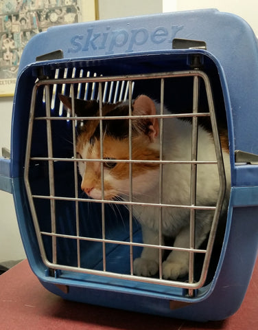 Cat in carrier at vet office