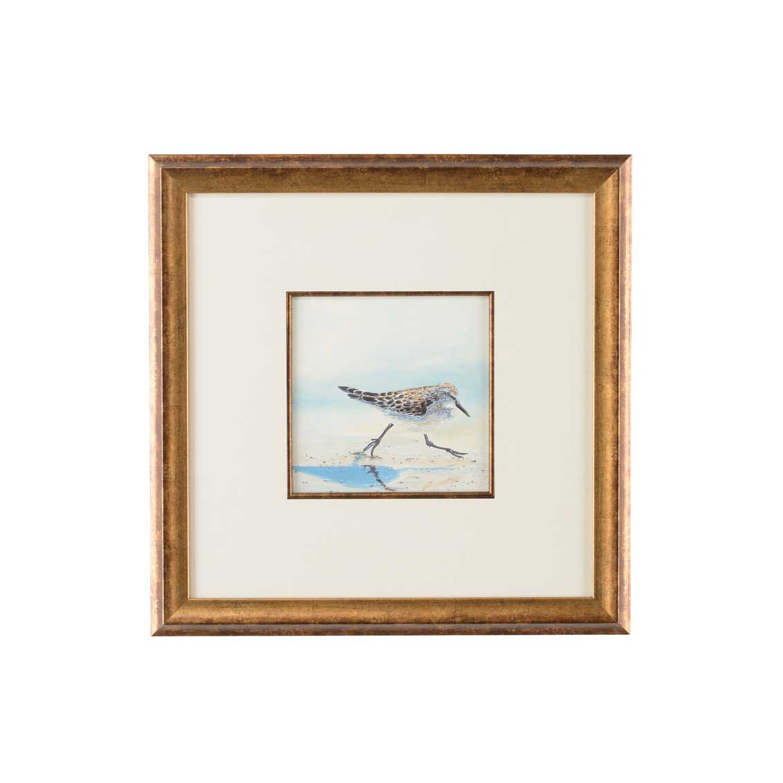 Lisa Kahn Collection Sand Piper IV watercolor print