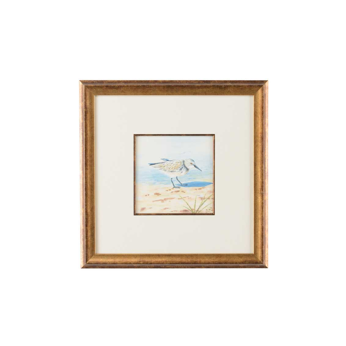 Lisa Kahn Collection Sand Piper VI watercolor print