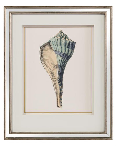 Shell study drawing giclee' one of a pair, second