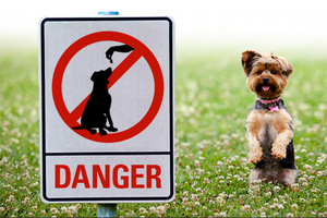 Foods That Are Dog-Gone Dangerous
