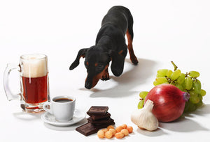 7 Common Household Items That Are Toxic to Dogs