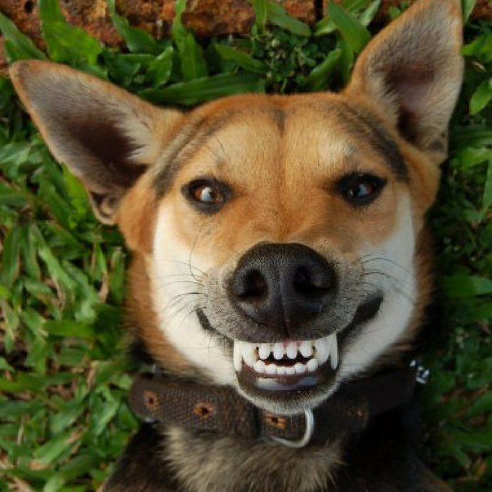 6 Foods That Clean Your Pet's Teeth Naturally
