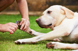 Dog Grooming Tips: Trimming Your Dog's Toenails