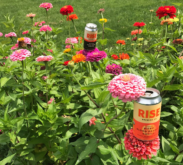 RISE nitro cold brew coffee -- organic, non-GMO, sustainably-sourced beverage in a can -- with flowers