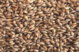 Malts & Grains