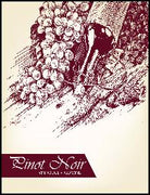 Pinot_Noir_Wine_Labels_30_ct