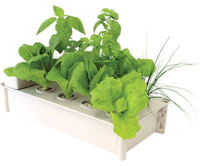 Salad Box Hydroponic Salad Garden Kit (4/cs)