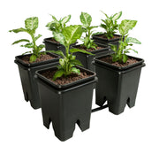 "Grow Flow 5-Gal Expansion Kit 3/4"" 6 pot, 5 Gal"