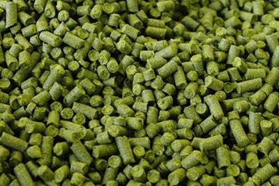 UK_East_Kent_Goldings_Hops