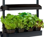 Micro Grow Light Garden Black (1/ea)