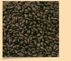 Roasted_Barley_Malt