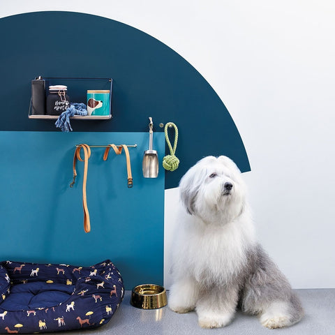 the dulux dog how to choose wall paint colours blue wall ideas