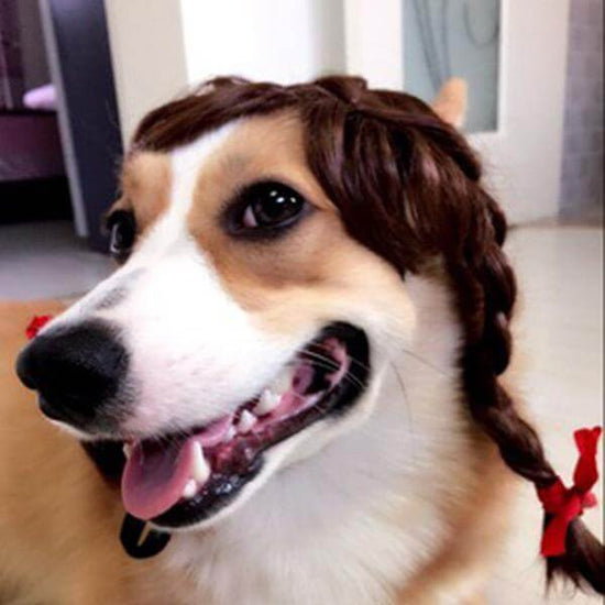 Fancy Wig for Dogs and Cats