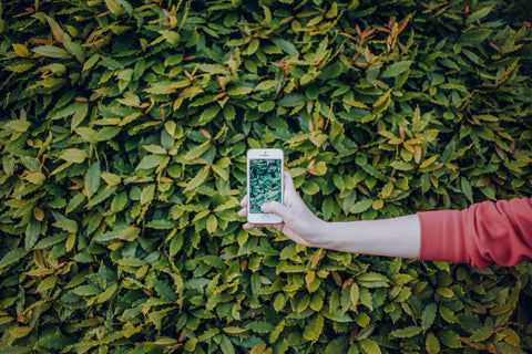 How to get rid of phones sustainably