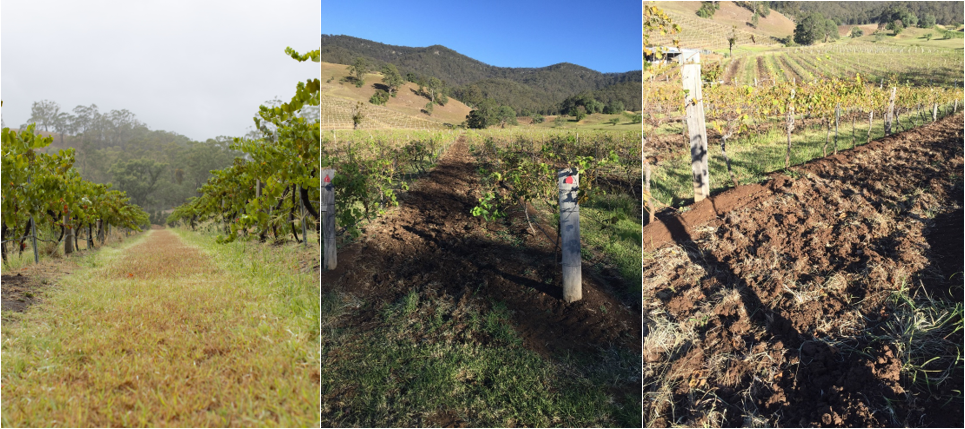 Vineyard Manager Update #1: Vine Cultivation