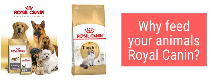 The Benefits Of Royal Canin | Summers Pet Accessories