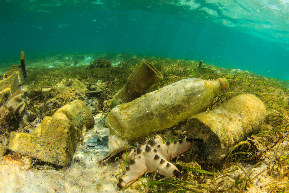 How Does Plastic Pollution Affect Marine Life and How Can We Reduce It?