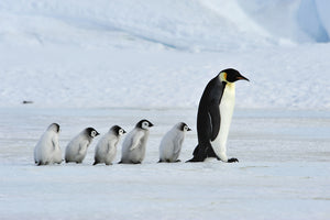 Climate Change Is Having A Huge Effect On Penguin Colonies