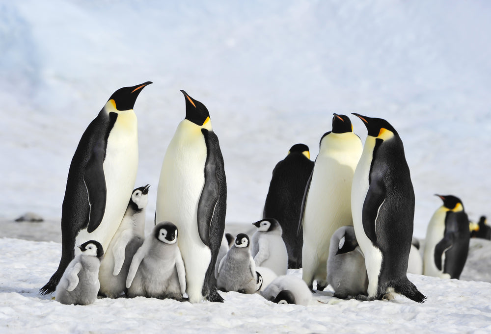 Addressing climate change to save the penguin population