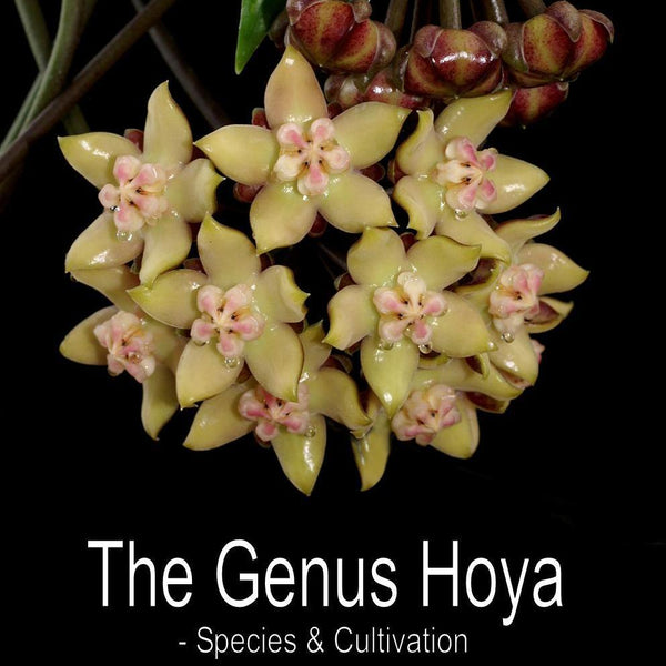 Resource Book: 'The Genus Hoya - Species and Cultivation'