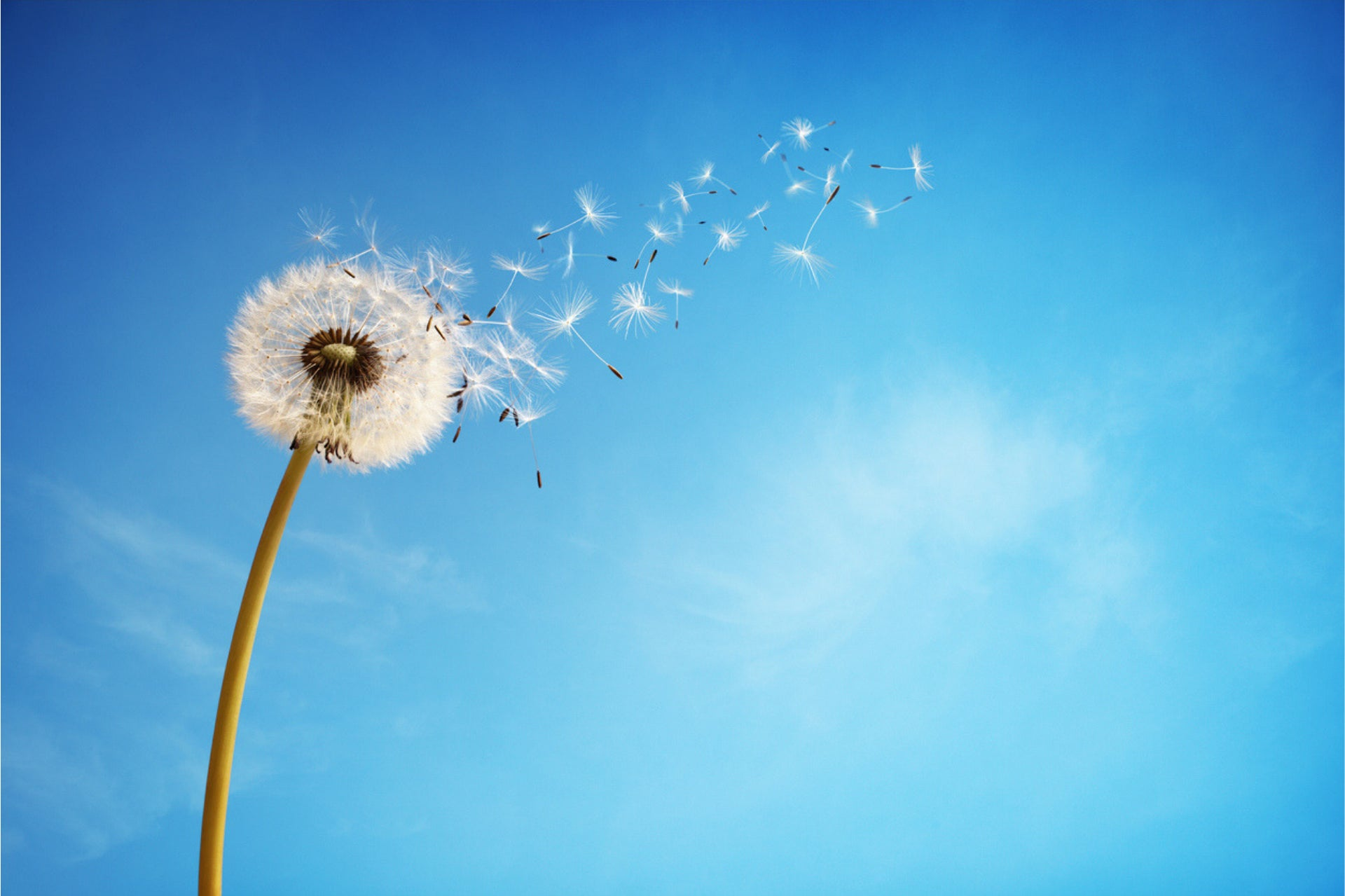 Getting to grips with hay fever - some top tips