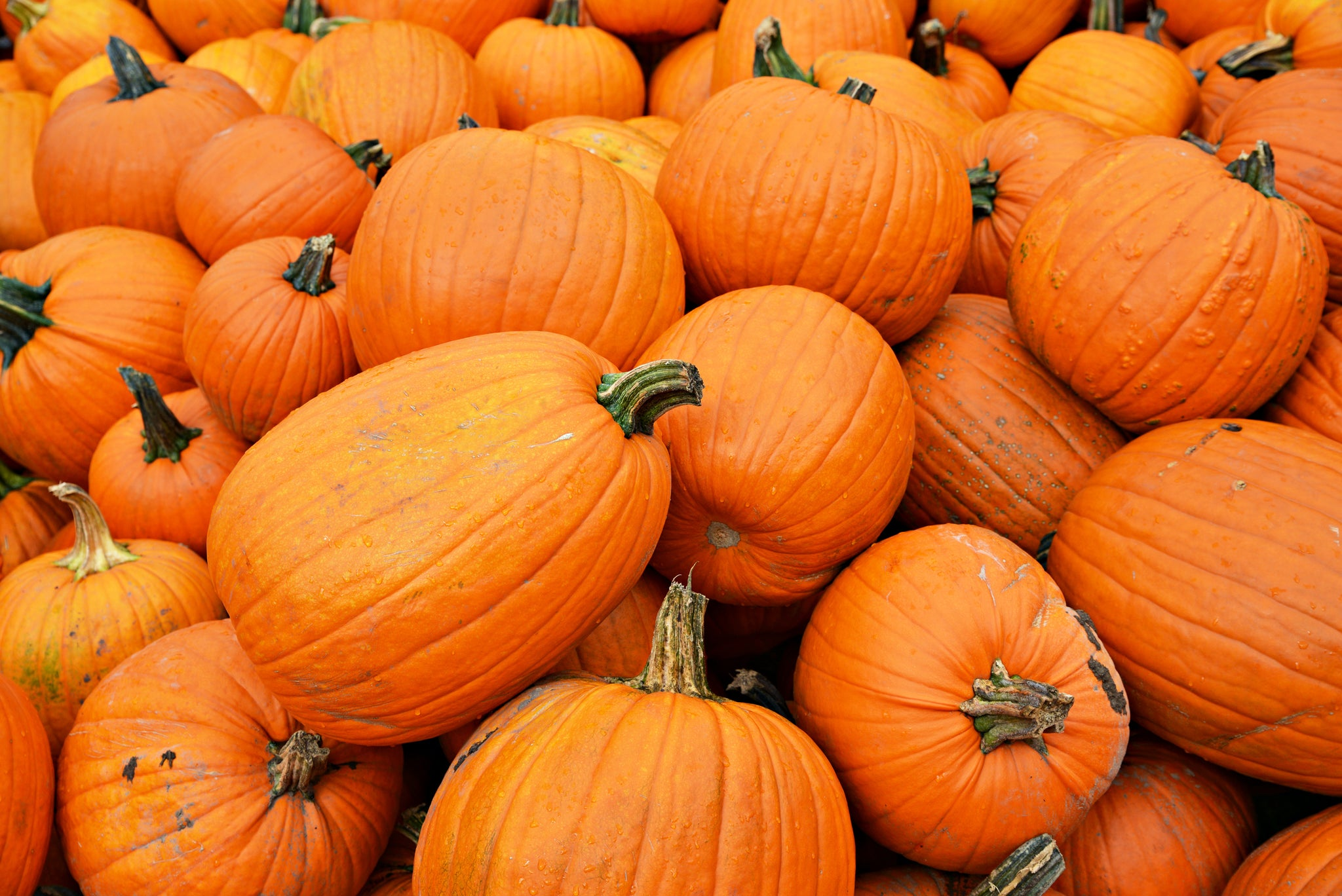 The Nutritional Benefits of Pumpkin