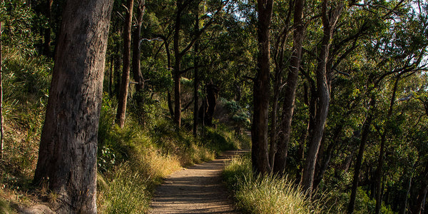 25 Short Hikes within 25km of Melbourne