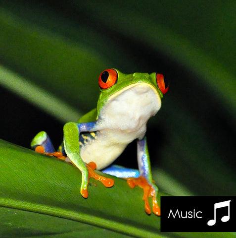 Rainforest - Nature Sounds with music