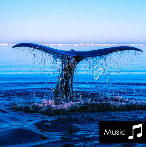 Whales - Nature Sounds with music