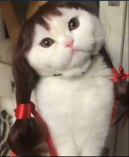 Lovely Cat  Wig Hair
