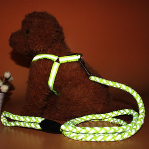 Reflective Lead + Free Harness