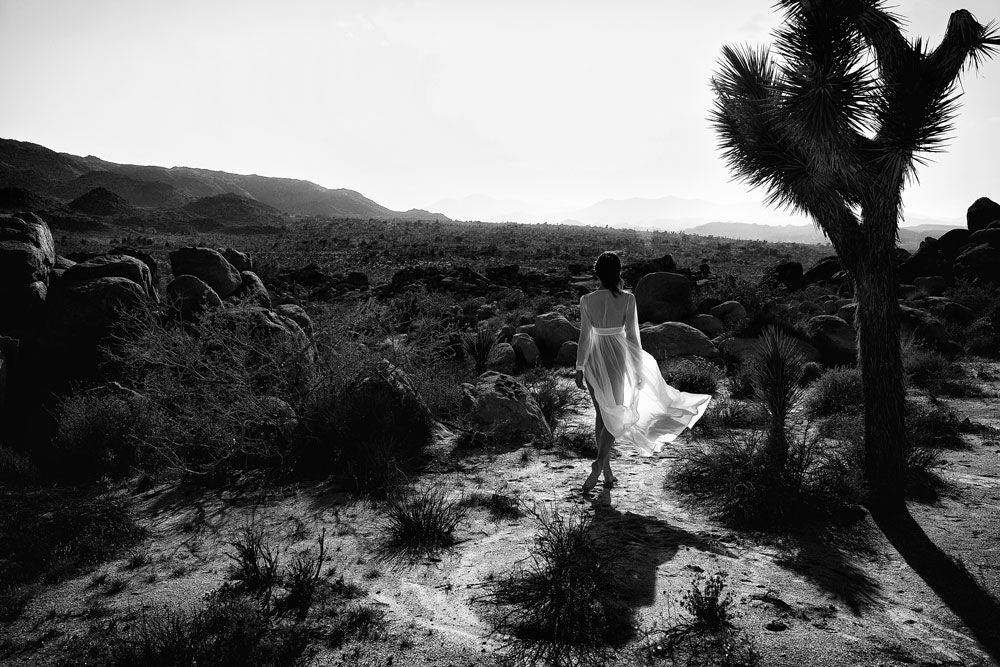 Lost In Joshua Tree