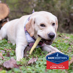 Barkworthies All Natural Mega Cow Tail Dog Chew
