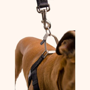 "Freedom No Pull Harness - 1"" Wide Medium (Chest Size 22 -28 inches)"