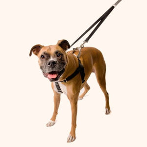 "Freedom No Pull Harness - 5/8"" Wide Medium (Chest Size 22 -28 inches)"