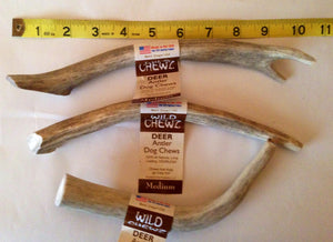 Wild Chewz Deer Antler (Medium Tyne)