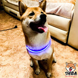 Collier à led clignotant (Recharge USB) - Shiba Inu