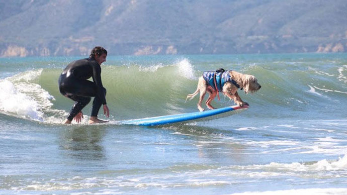 Check out our sponsored surf dog Bamboo