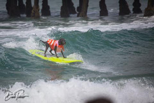 Come cheer on our furry surfing friends!