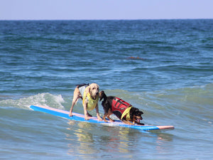 The McKenna Subaru Surf City Surf Dog® results are in!