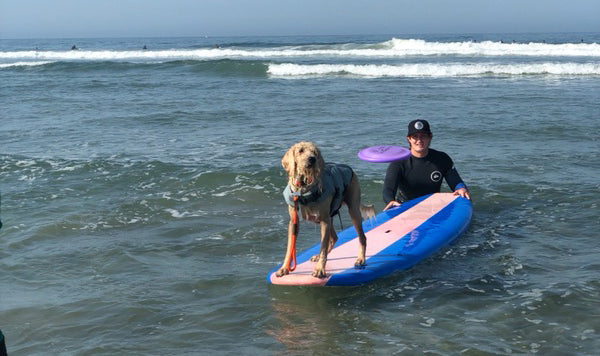 Event: 2018 Imperial Beach Surf Dog Competition