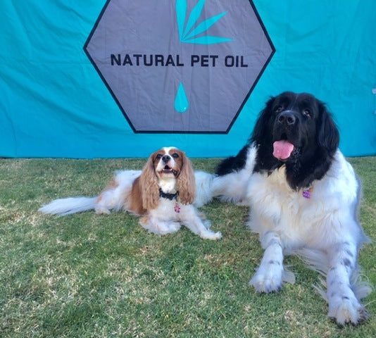 Pets of the Month: Harper and Finn