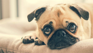 Common causes of anxiety in your pet and what you can do about it