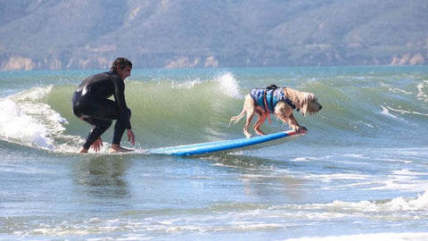 surf dog Bamboo
