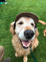 dogwithhat