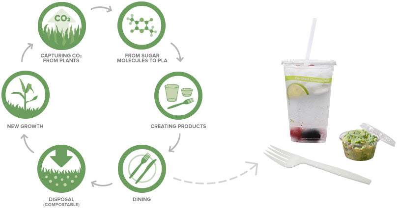 1. Capturing CO2 from plants 2. From sugar molecules to PLA 3. Creating products 4. Dining 5. Disposal (compostable) 6. New growth