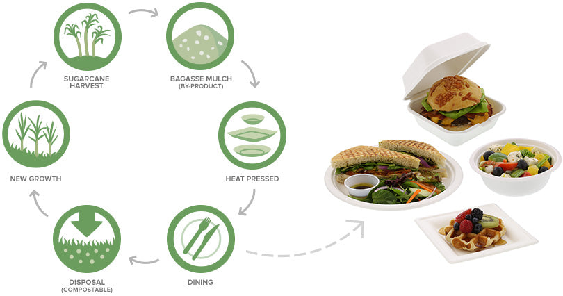 1. Sugarcane harvest 2. Bagasse Mulch (by-product) 3. Heat pressed 4. Dining 5. Disposal (compostable) 6. New growth