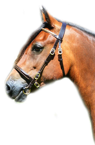 Shires Blenheim Economy In Hand Bridle